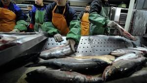 """Технологии, которые продлевают """"жизнь"""" консервной рыбы, придумали в Приморье"""