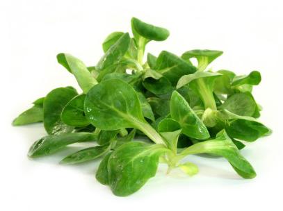 Корн (полевой салат, рапунцель, ягнячья травка, маш-салат, Фельдсалат)