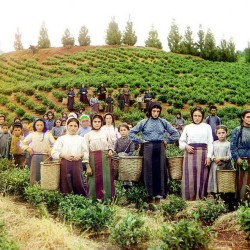 История российского чая