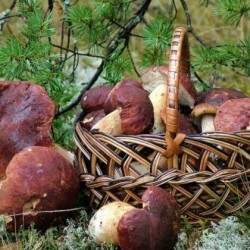 Правила хранения грибов