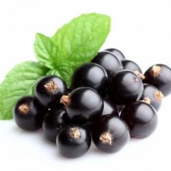 Черная смородина - свойства и пищевая ценность