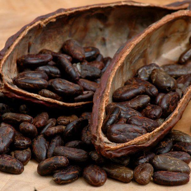 Какао-бобы - вредны или полезны?