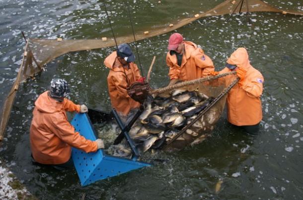 Белорусская рыботорговля