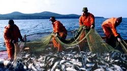 Власти приняли решение начать борьбу со спекулянтами на рыбном рынке