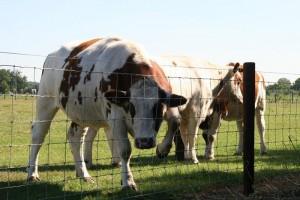 Каждый год в мире производится семьсот пятьдесят миллионов тонн молока