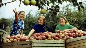 Финансовые потери фермеров из Молдавии