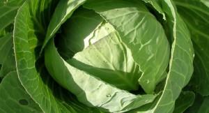 Применение капусты в кулинарном искусстве