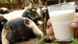 Эстония будет защищать свои молочные продукты от ограничений России